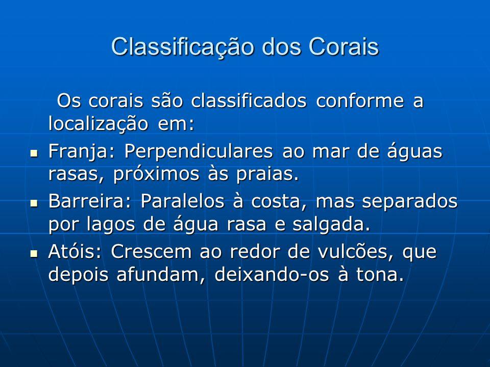 Classificação dos Corais