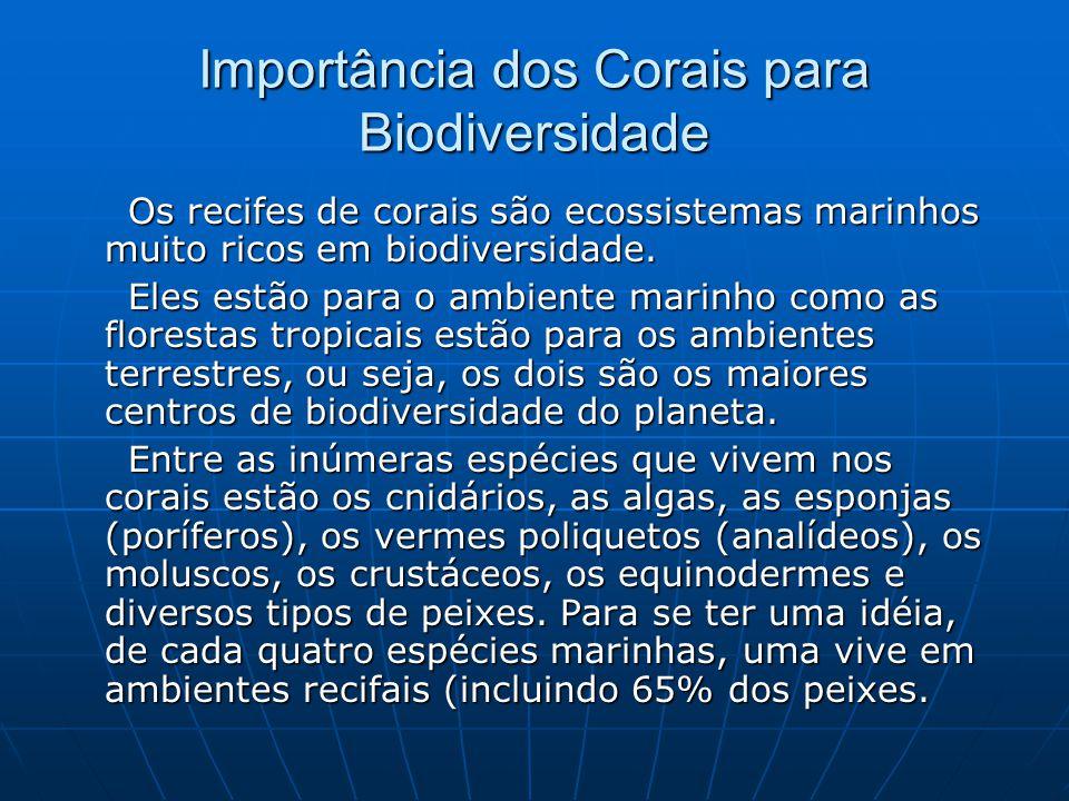 Importância dos Corais para Biodiversidade