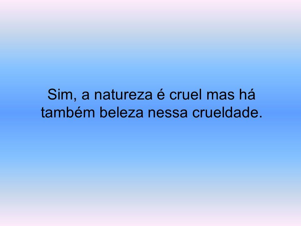 Sim, a natureza é cruel mas há também beleza nessa crueldade.
