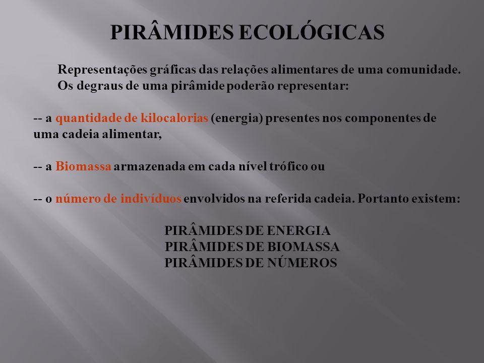 PIRÂMIDES ECOLÓGICAS Representações gráficas das relações alimentares de uma comunidade. Os degraus de uma pirâmide poderão representar: