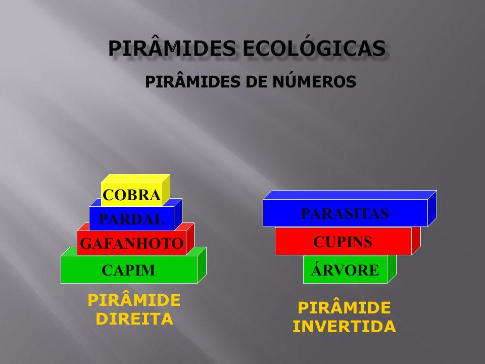 PIRÂMIDES ECOLÓGICAS PIRÂMIDES DE NÚMEROS COBRA PARASITAS PARDAL
