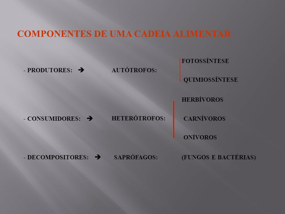COMPONENTES DE UMA CADEIA ALIMENTAR