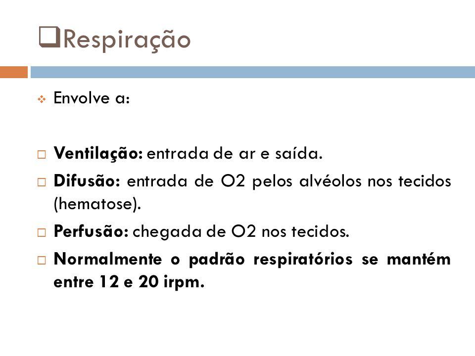 Respiração Envolve a: Ventilação: entrada de ar e saída.