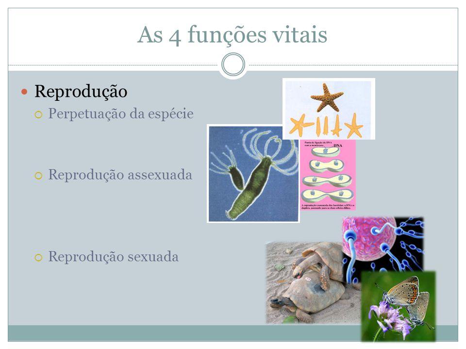 As 4 funções vitais Reprodução Perpetuação da espécie