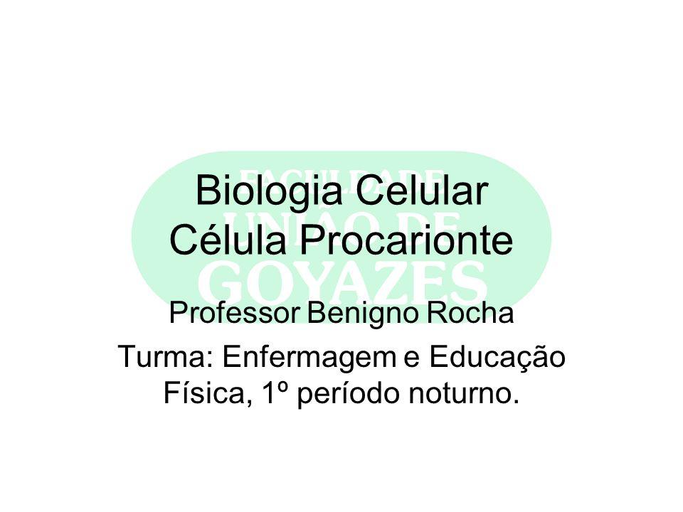 Biologia Celular Célula Procarionte