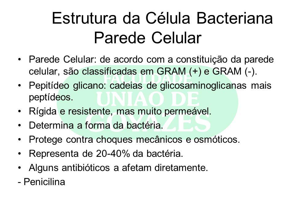 Estrutura da Célula Bacteriana Parede Celular