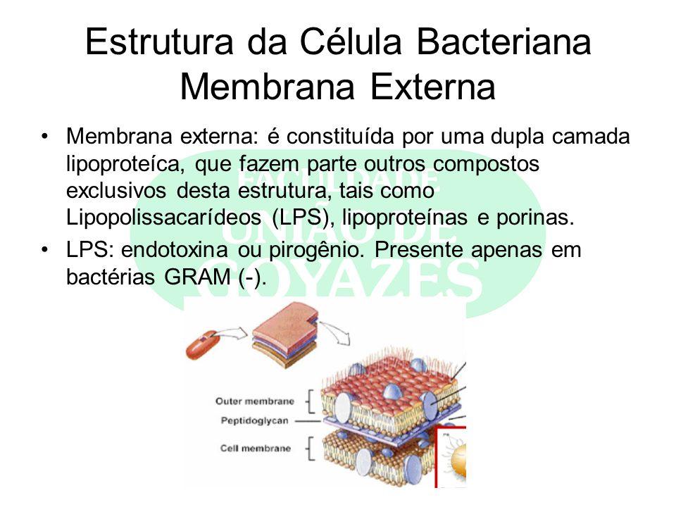 Estrutura da Célula Bacteriana Membrana Externa