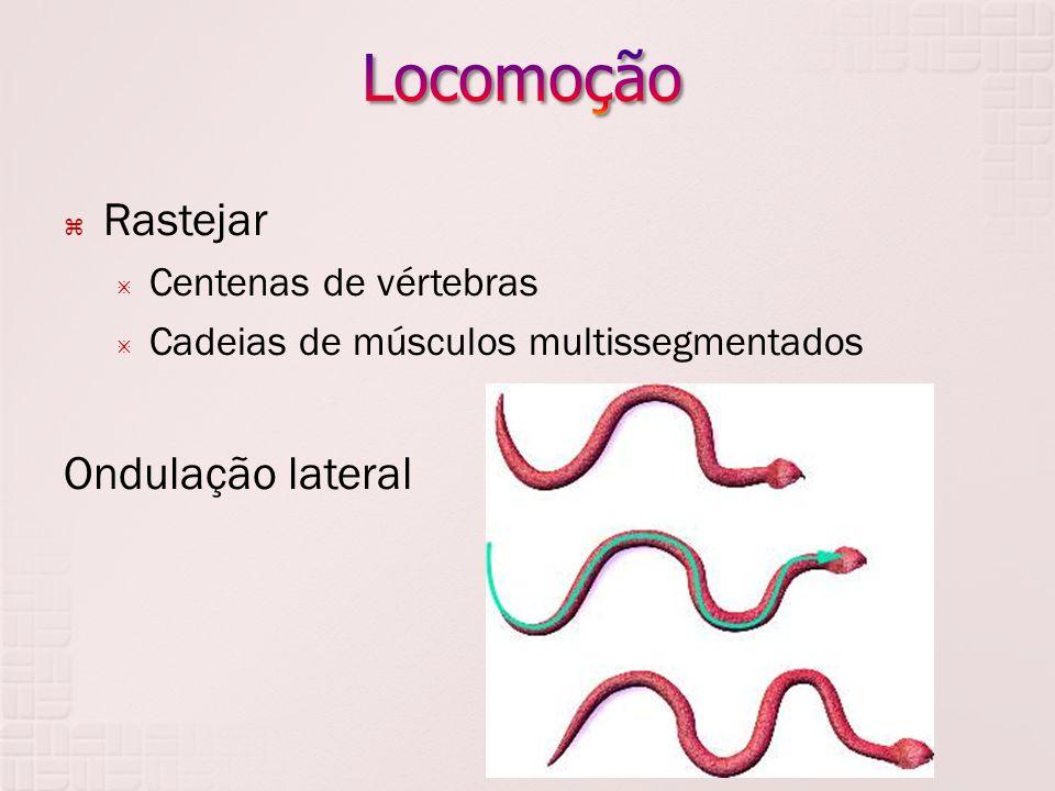 Locomoção Rastejar Ondulação lateral Centenas de vértebras