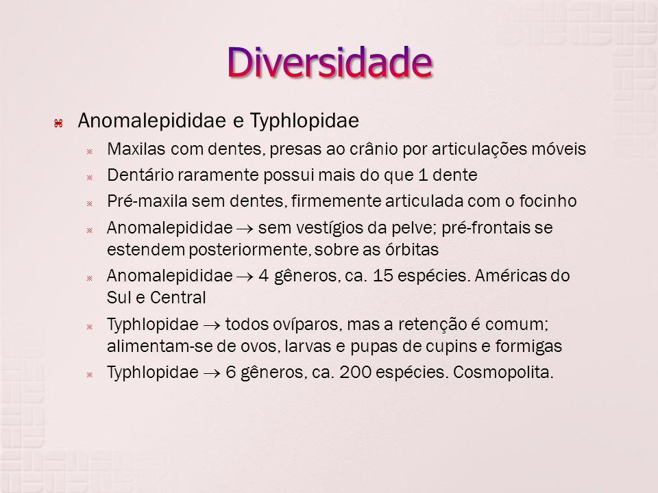 Diversidade Anomalepididae e Typhlopidae
