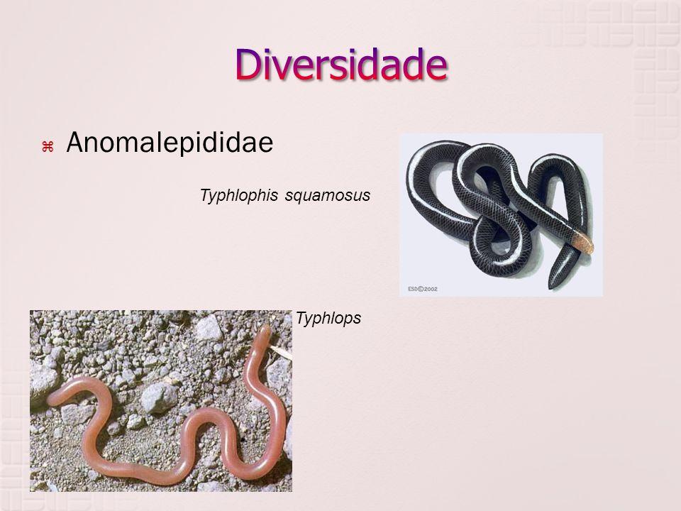Diversidade Anomalepididae Typhlopidae Typhlophis squamosus Typhlops