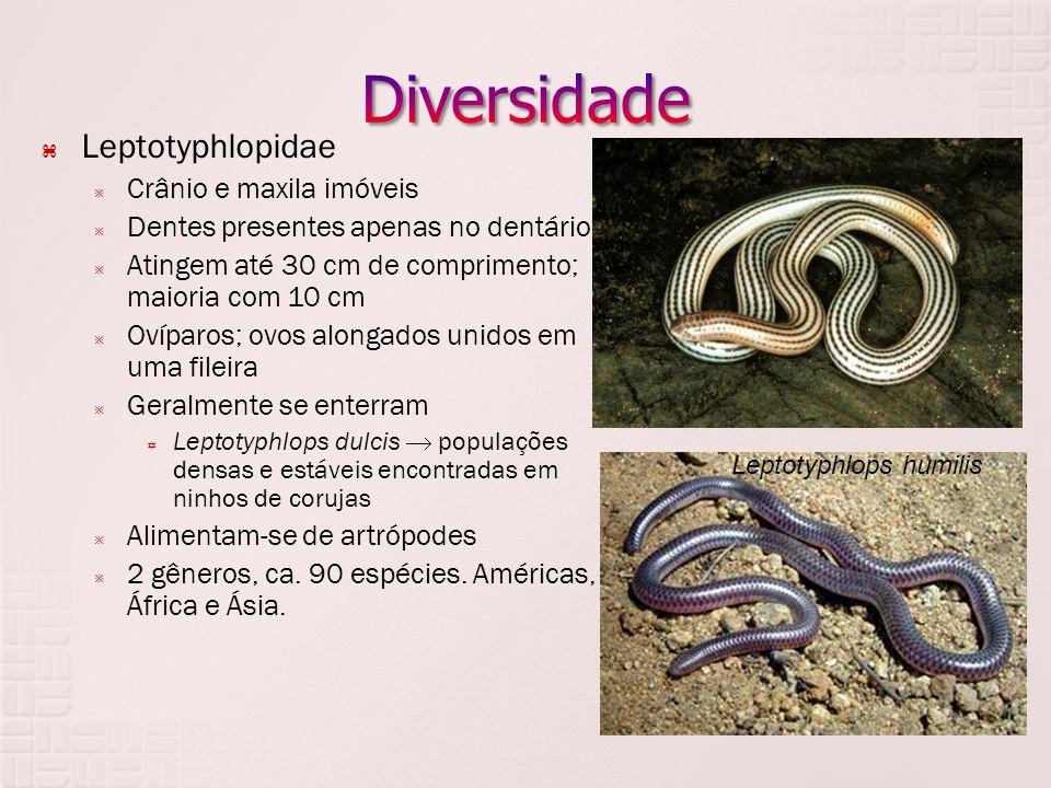 Diversidade Leptotyphlopidae Crânio e maxila imóveis