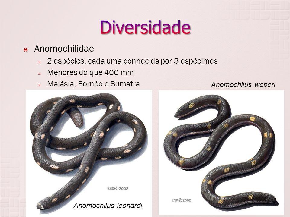 Diversidade Anomochilidae