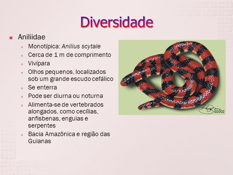 Diversidade Aniliidae Monotípica: Anilius scytale