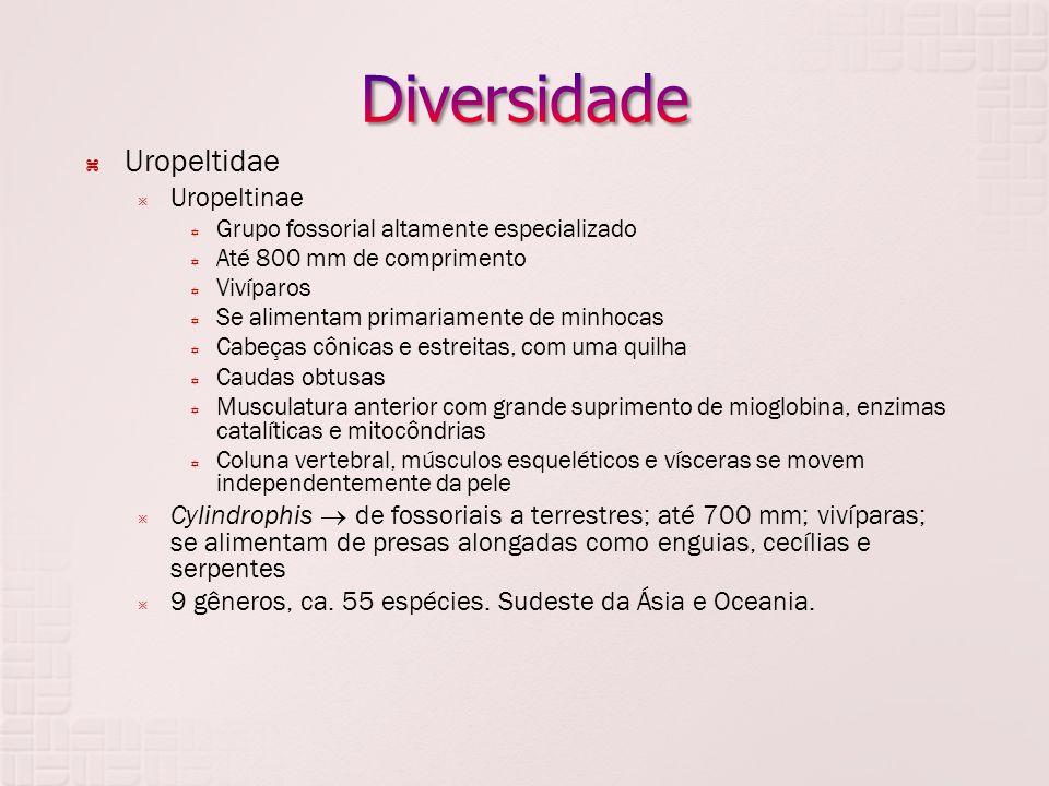 Diversidade Uropeltidae Uropeltinae