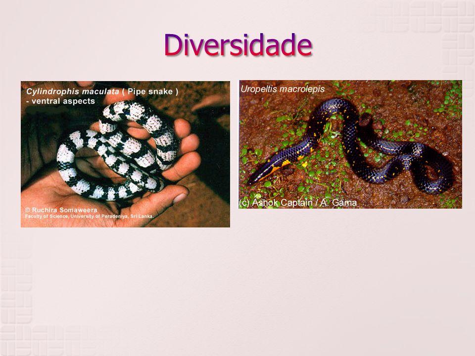 Diversidade Uropeltidae