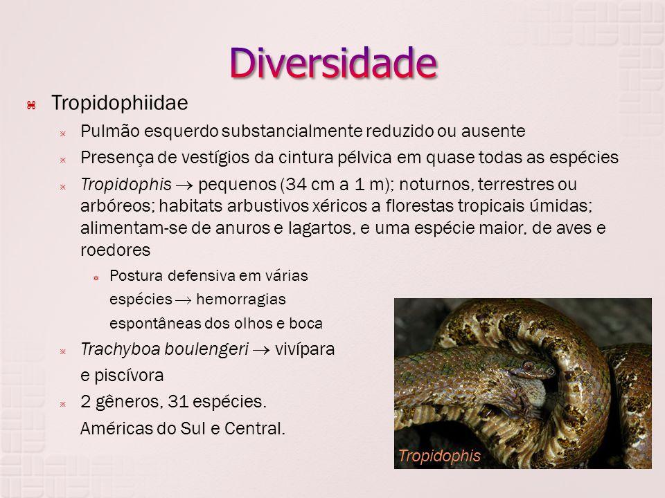 Diversidade Tropidophiidae