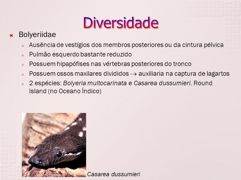 Diversidade Bolyeriidae