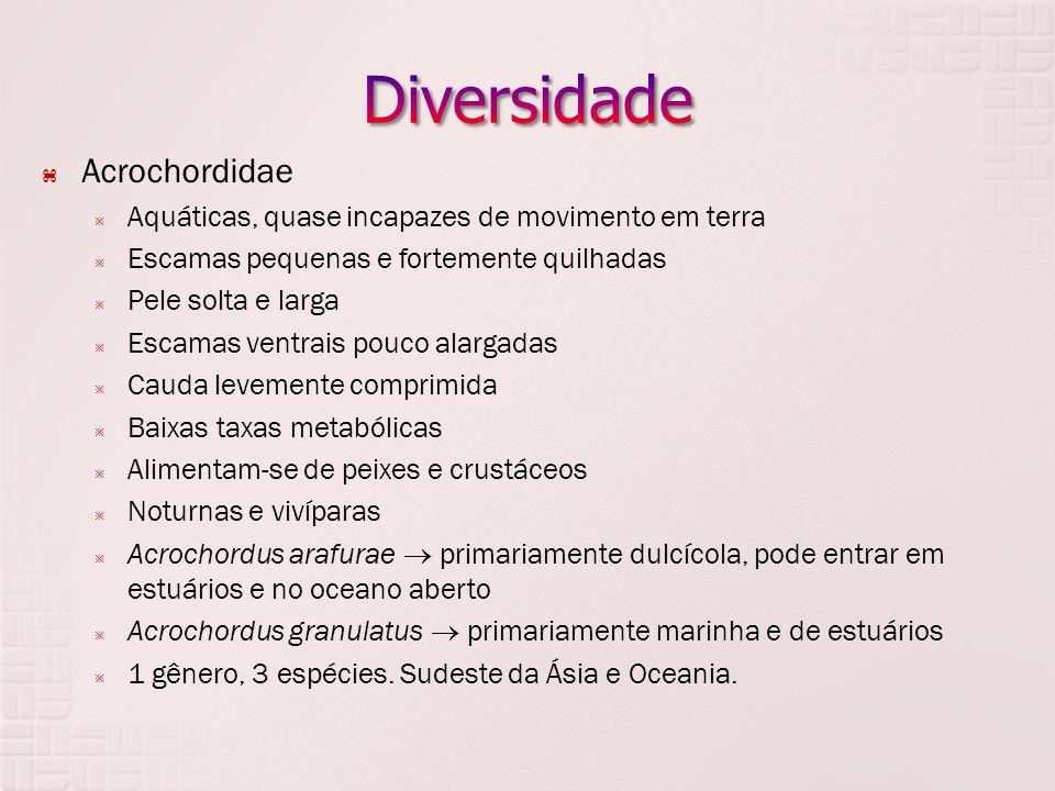 Diversidade Acrochordidae
