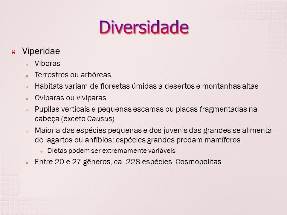 Diversidade Viperidae Víboras Terrestres ou arbóreas