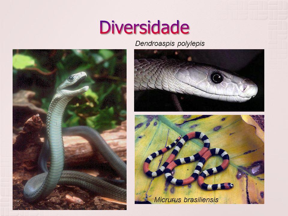 Diversidade Dendroaspis polylepis Elapidae Micrurus brasiliensis