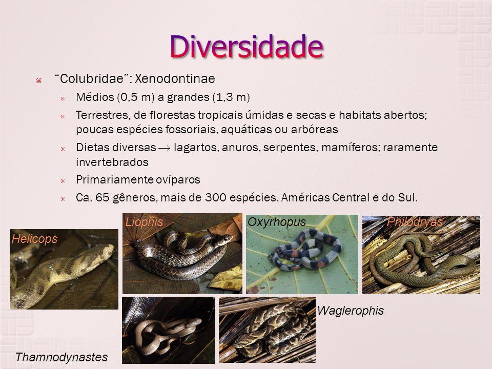 Diversidade Colubridae : Xenodontinae