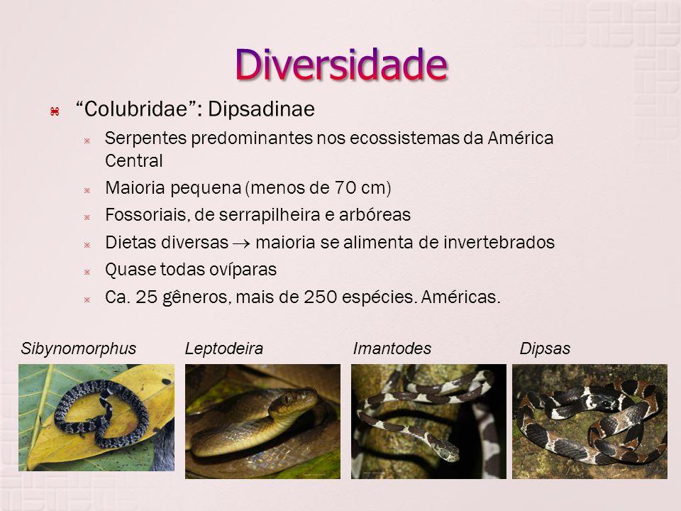 Diversidade Colubridae : Dipsadinae