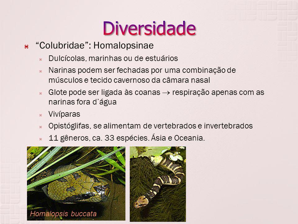 Diversidade Colubridae : Homalopsinae