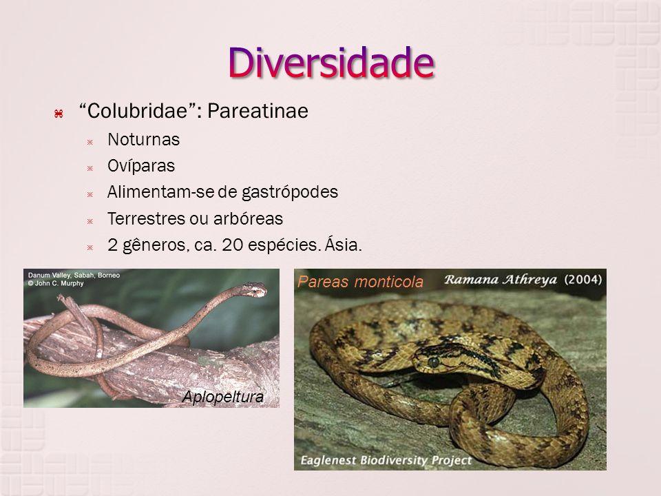 Diversidade Colubridae : Pareatinae Noturnas Ovíparas