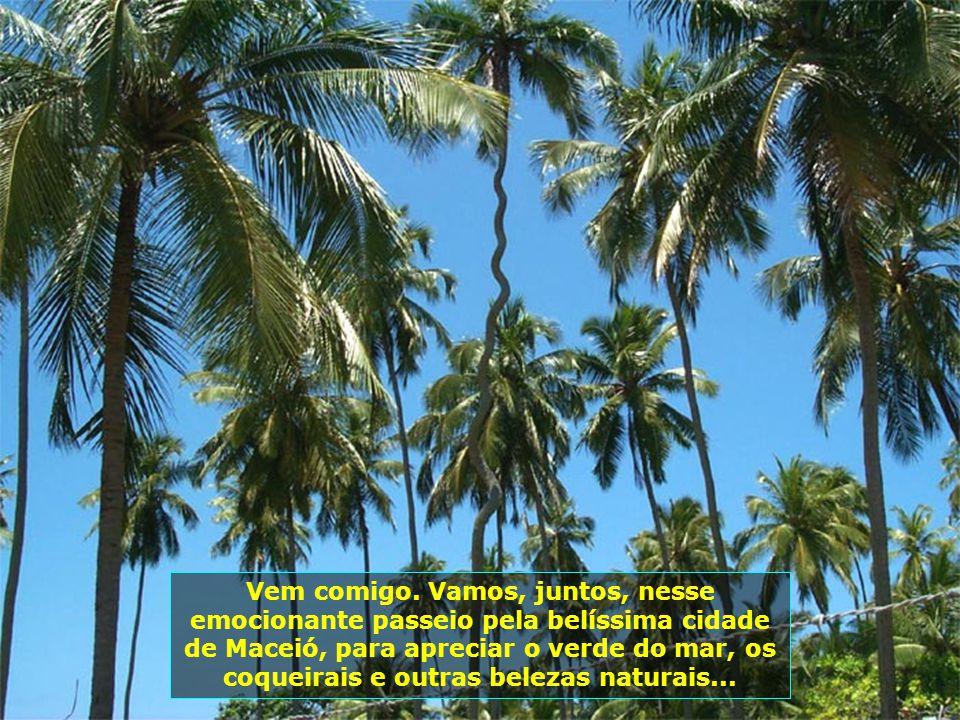 P0008067 - MACEIÓ - COQUEIRO PARAFUSO
