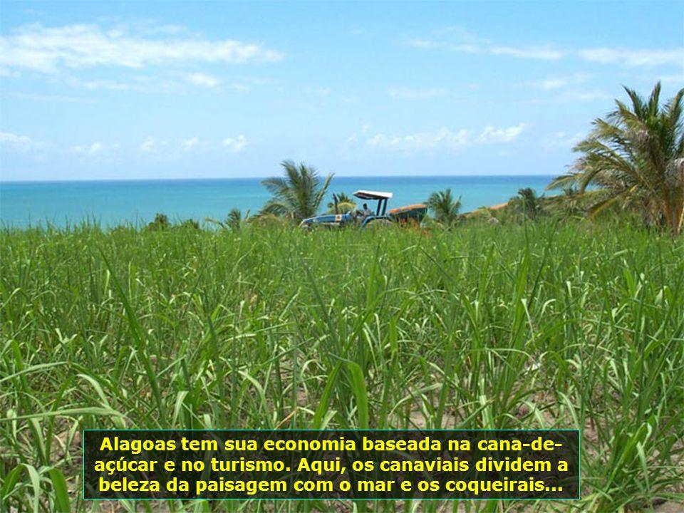 P0008230 - JEQUIÁ DA PRAIA - CANAVIAL