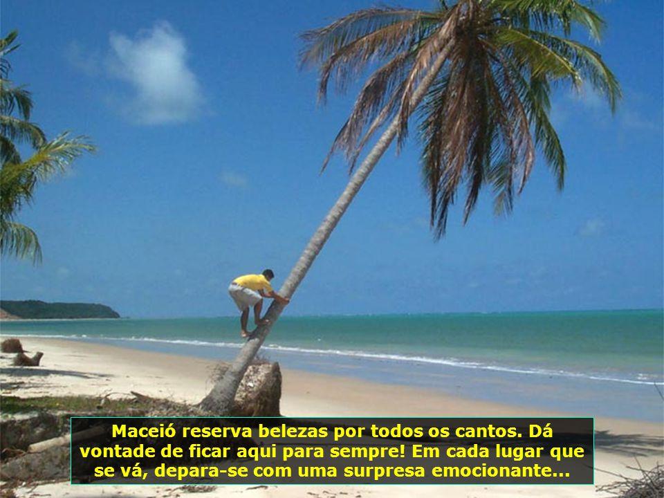P0008098 - BARRA DE SANTO ANTONIO - ILHA DA CROA - COQUEIRO TORTO NA PRAIA