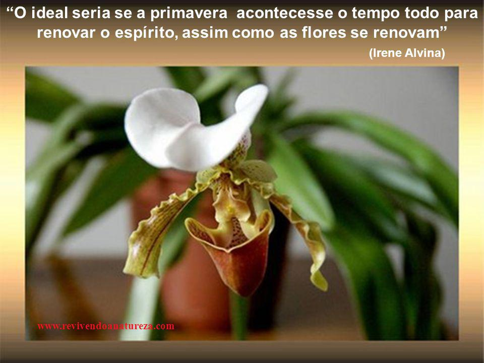 O ideal seria se a primavera acontecesse o tempo todo para renovar o espírito, assim como as flores se renovam