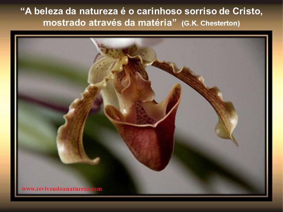 A beleza da natureza é o carinhoso sorriso de Cristo, mostrado através da matéria (G.K. Chesterton)
