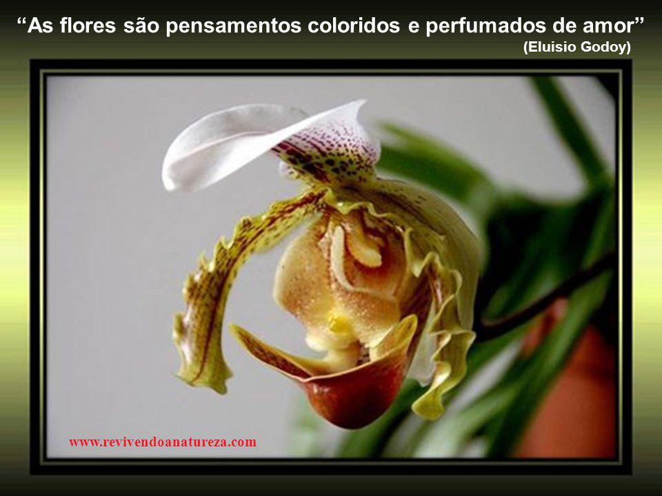 As flores são pensamentos coloridos e perfumados de amor