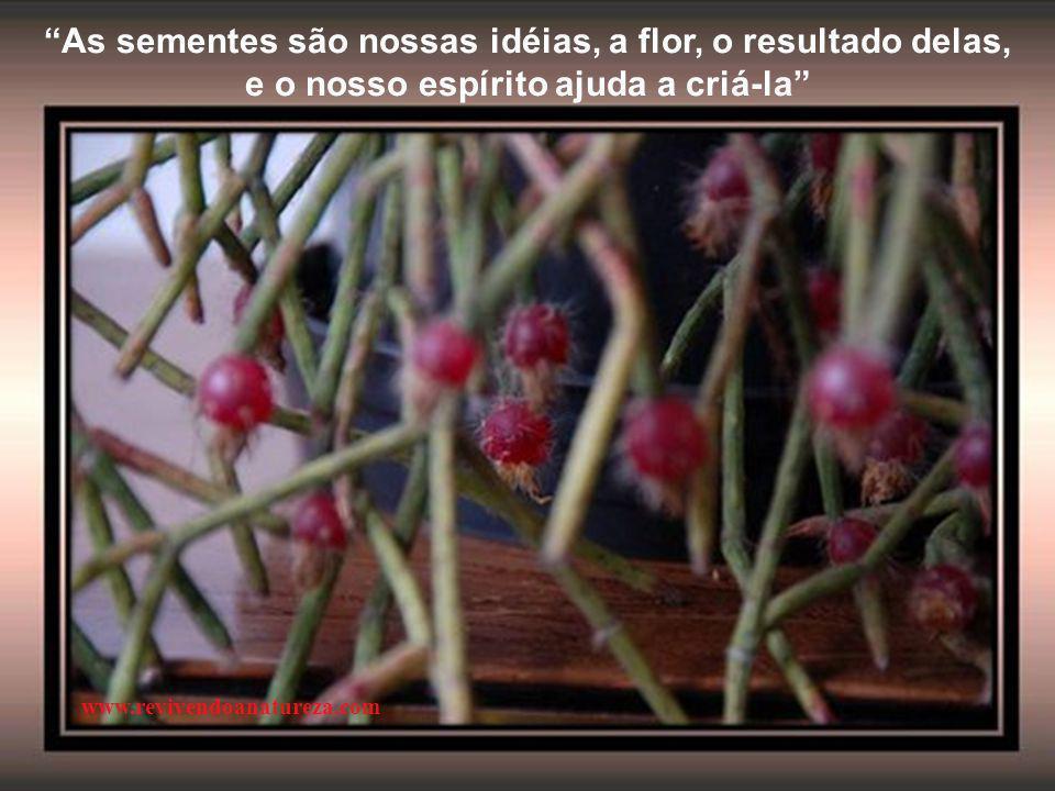 As sementes são nossas idéias, a flor, o resultado delas,