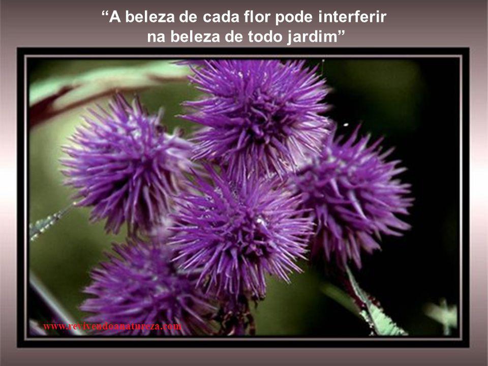 A beleza de cada flor pode interferir na beleza de todo jardim