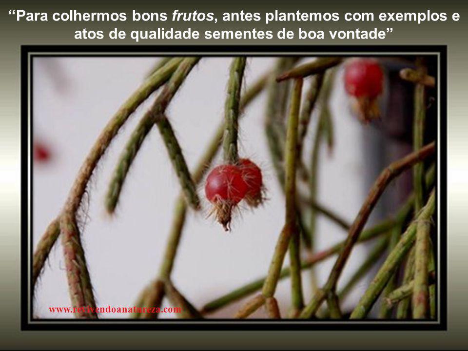Para colhermos bons frutos, antes plantemos com exemplos e atos de qualidade sementes de boa vontade