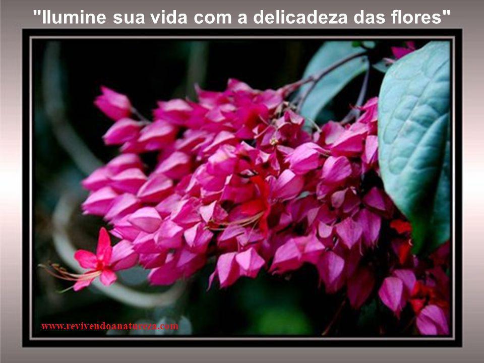 Ilumine sua vida com a delicadeza das flores