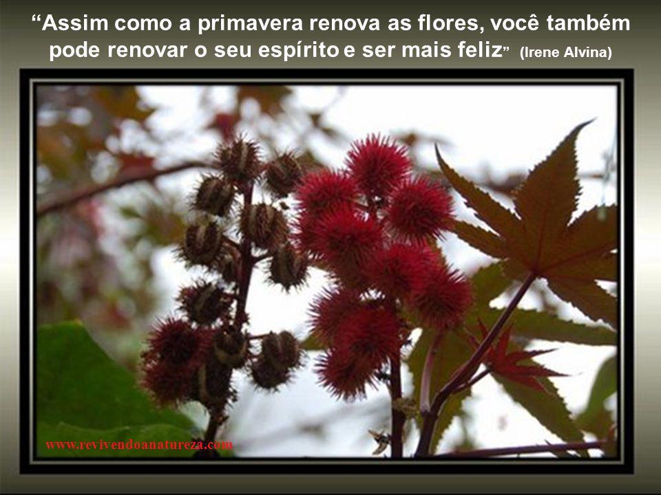 Assim como a primavera renova as flores, você também pode renovar o seu espírito e ser mais feliz (Irene Alvina)