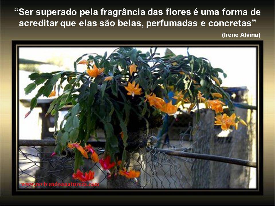 Ser superado pela fragrância das flores é uma forma de acreditar que elas são belas, perfumadas e concretas