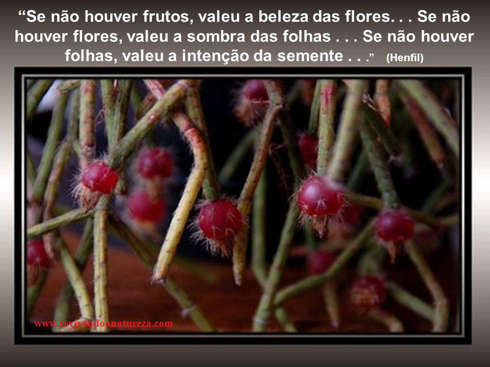 Se não houver frutos, valeu a beleza das flores