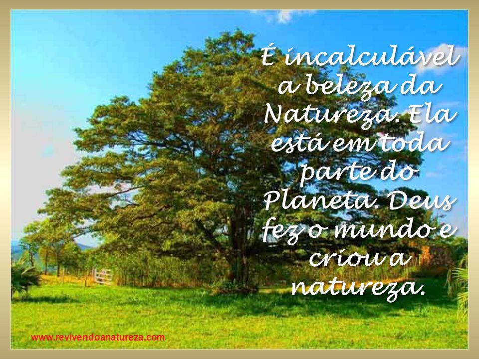 É incalculável a beleza da Natureza. Ela está em toda parte do Planeta. Deus fez o mundo e criou a natureza.