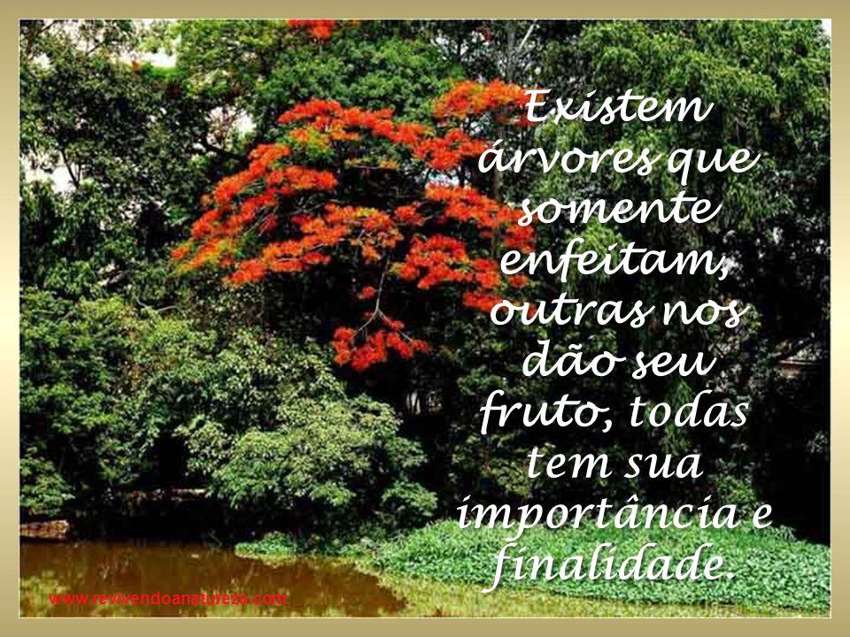 Existem árvores que somente enfeitam, outras nos dão seu fruto, todas tem sua importância e finalidade.