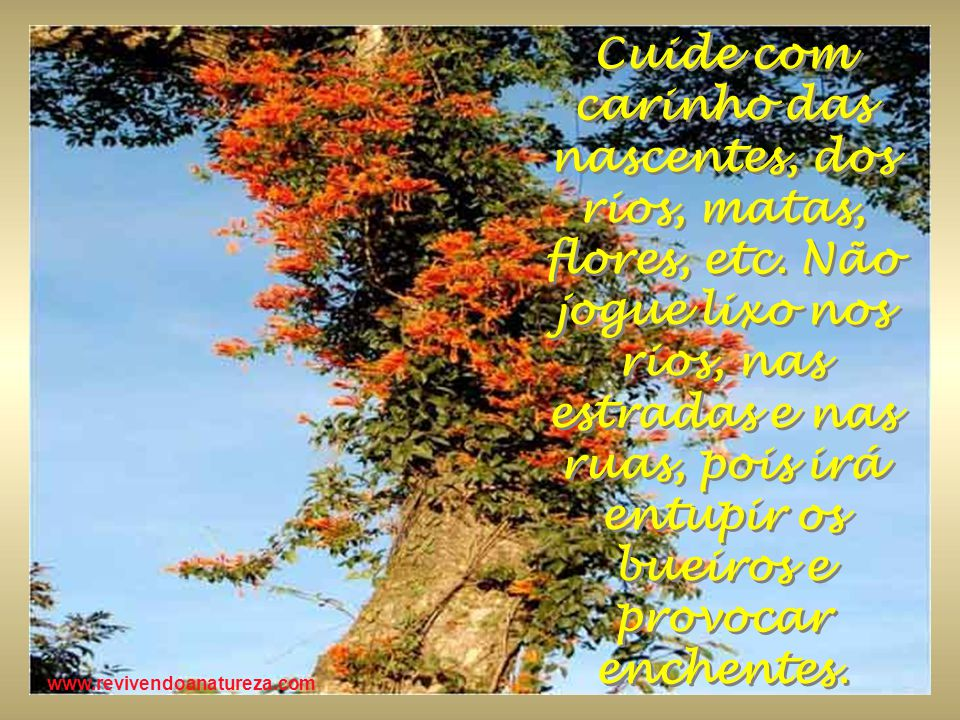 Cuide com carinho das nascentes, dos rios, matas, flores, etc