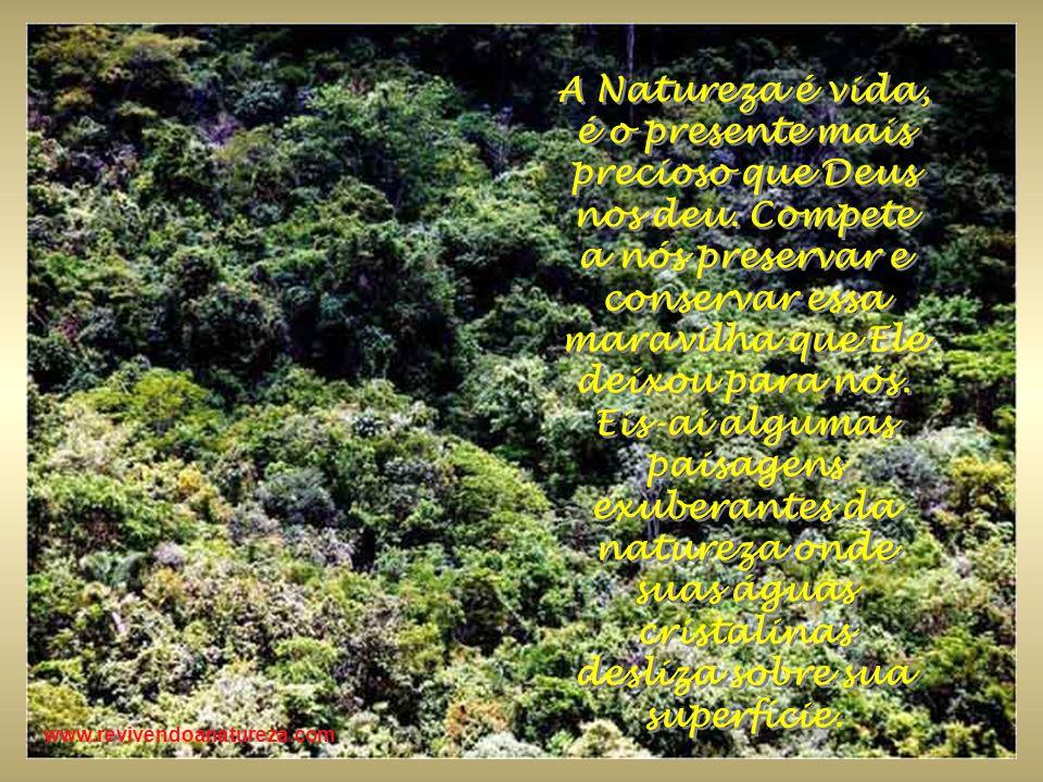 A Natureza é vida, é o presente mais precioso que Deus nos deu