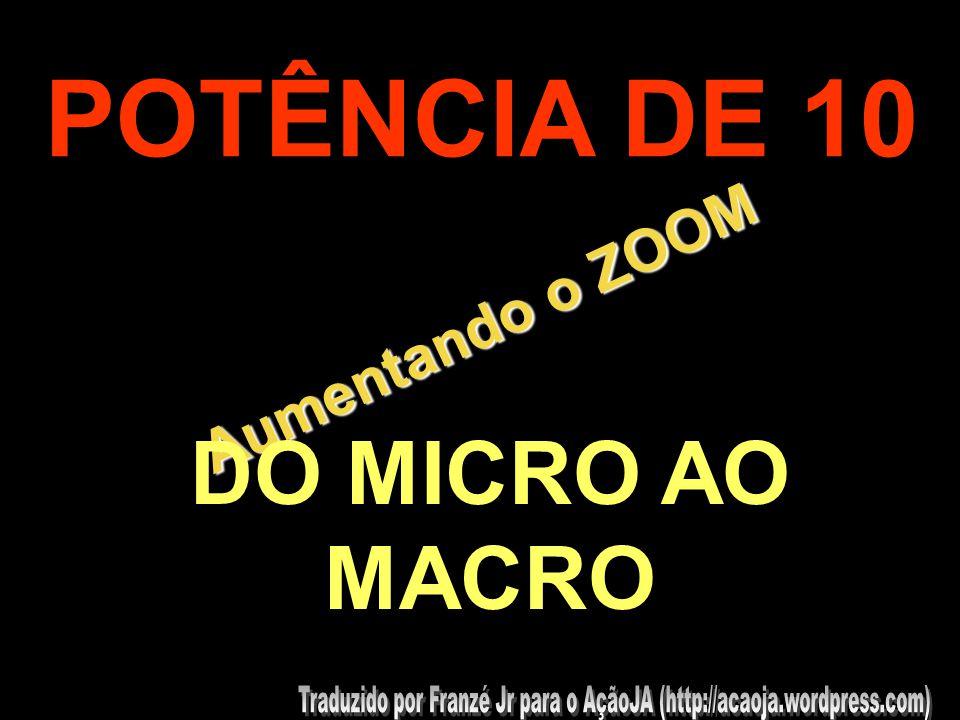 POTÊNCIA DE 10 Aumentando o ZOOM DO MICRO AO MACRO .