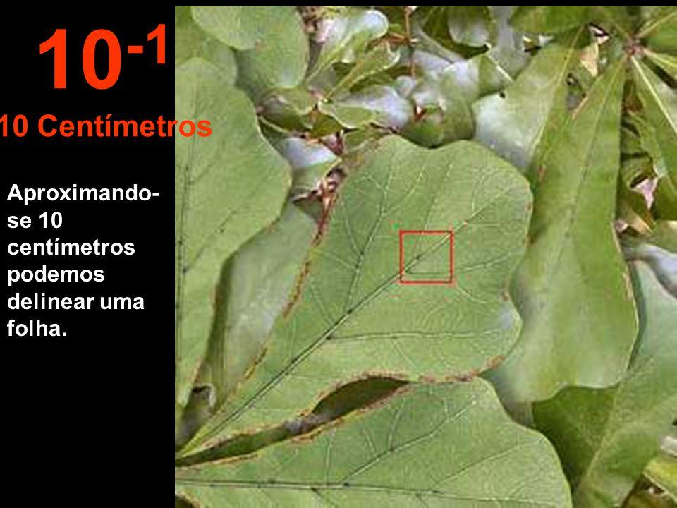 10-1 10 Centímetros Aproximando-se 10 centímetros podemos delinear uma folha.