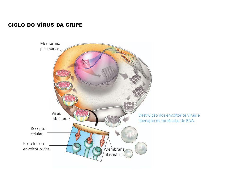 CICLO DO VÍRUS DA GRIPE Membrana plasmática Vírus infectante