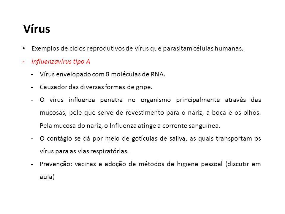 Vírus Exemplos de ciclos reprodutivos de vírus que parasitam células humanas. Influenzavírus tipo A.