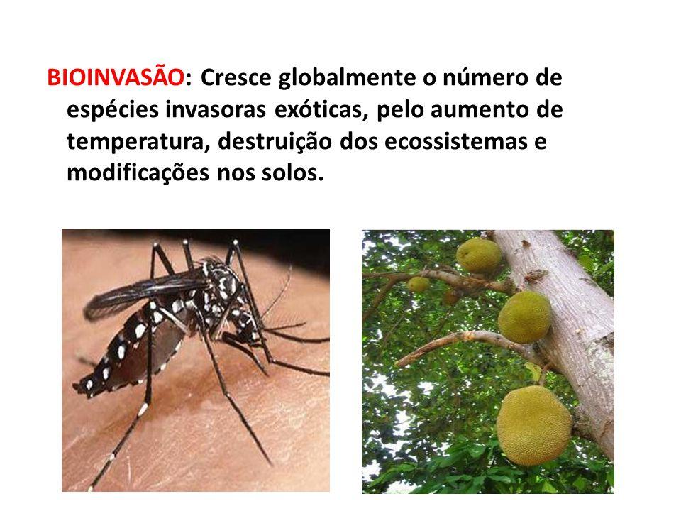 BIOINVASÃO: Cresce globalmente o número de espécies invasoras exóticas, pelo aumento de temperatura, destruição dos ecossistemas e modificações nos solos.